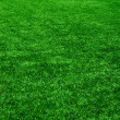 Grass from golf field. Texture of green grass — Stock Photo #11915935