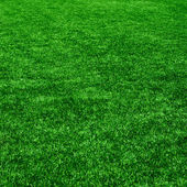 The grass from golf field. Texture of green grass — Stock Photo
