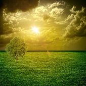 A fine green meadow with tree All on sky sunset — Stock Photo