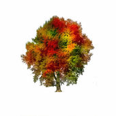 Autumn Tree isolated on a white background — Stock Photo
