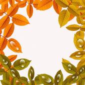 与大滴自然秋背景 — 图库照片