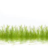 Abstract green nature background with grass — Stock Photo