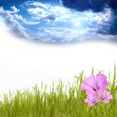 Green grass under blue sky with beautyful flowers — Stock Photo