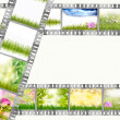 Film strip with different photos of nature and flowers — Stock Photo