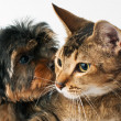 Puppy and cat in studio — Stock Photo #11114937