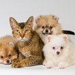 Cat and puppy in studio — Stock Photo #11140150