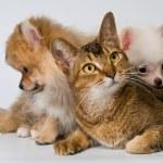 gato y cachorros en estudio — Foto de Stock   #11856513