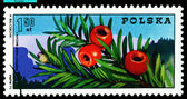 Vintage postage stamp. Yew branch with berries. — Stock Photo
