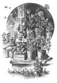 Starszy utrzymać ogród — Zdjęcie stockowe