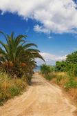 A dirt road leading to a secluded beach in Hanioti — Stock Photo
