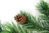 Xmas tree decoration isolated on white — 图库照片