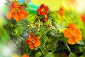 Fundo de flores silvestres — Foto Stock