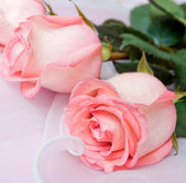 Pink roses on silk close up — Stock Photo