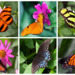 Butterflies collection — Foto Stock