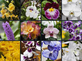 Collage of orchid — Stock Photo