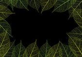 Vector leaf — Stock Vector