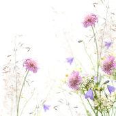 Blume-rahmen - frühling oder sommer hintergrund — Stockfoto