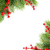 Xmas green tree and red holly berry on white background — Stock Photo