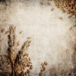 Wheat grunge background — Stock Photo