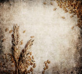 Fondo grunge de trigo — Foto de Stock