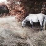 White horse — Photo #11955175