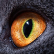 The yellow cat's eye — Stock Photo