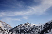 Mountains covered with snow and forests — ストック写真