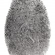 Stock Photo: Real fingerprint