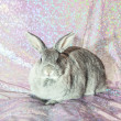 Rabbit - Stockfoto