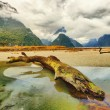 Milford sound - Stock Photo