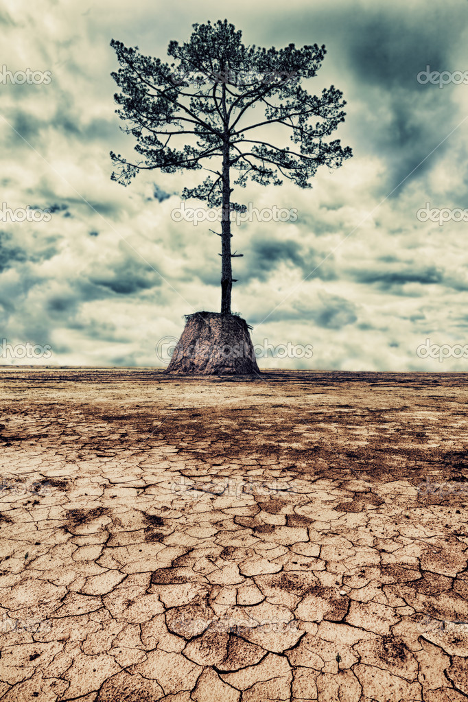 The last tree. Dried cracked mud on the foreground — Stock Photo #11800529
