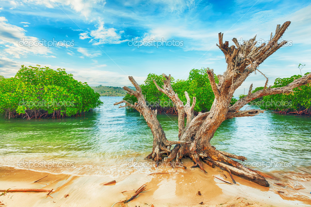 Tropical island. Dried tree on the foreground — Stock Photo #12276061