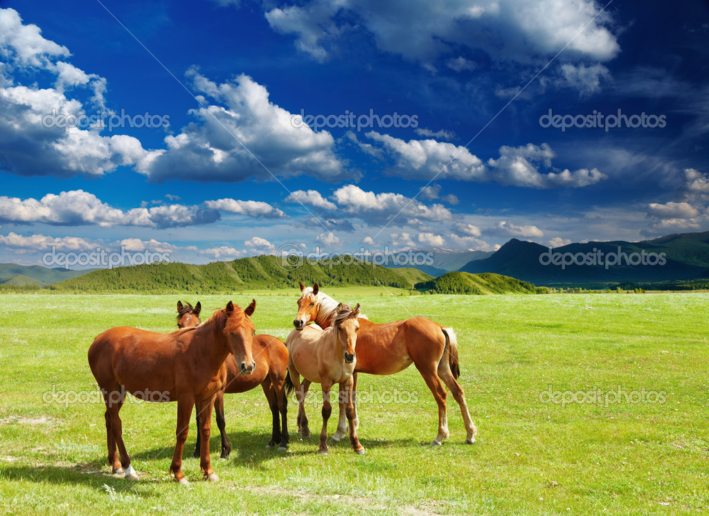 Mountain landscape with grazing horses — Stock Photo #11377651