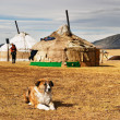 Yurta in mongolian desert - Stock Photo