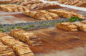 Timber export terminal — Stock Photo