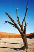 Désert du Namib, la Namibie — Photo