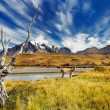 Stock Photo: Torres del Paine, Chile