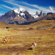 Torres del Paine, Patagonia, Chile - Stock Photo