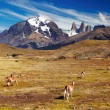 Torres del Paine, Patagonia, Chile -  