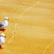 Royalty-Free Stock Photo: Two seagulls