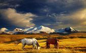 ορεινό τοπίο — Φωτογραφία Αρχείου