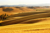 Countryside landscape in Tuscany region of Italy — Stock Photo