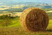 Golden hayfield in a bright blue sky in tuscany — Stock Photo