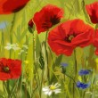 Field of poppies - illustration — Stock Photo