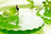 Miniature golf on fruits — Stock Photo