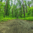Forest dirt road — Stockfoto