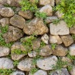 Texture of old stone wall and green plants — Photo