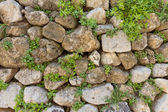 Texture of old stone wall and green plants — Stock Photo