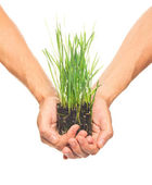 Green grass in human hands — Stock Photo