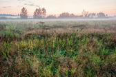 Foggy sunset in summer field — Stock Photo